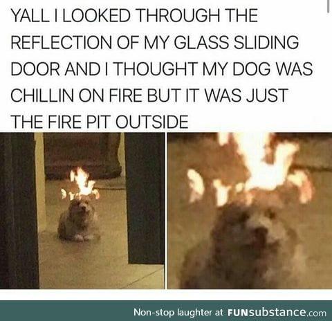Dog on fire