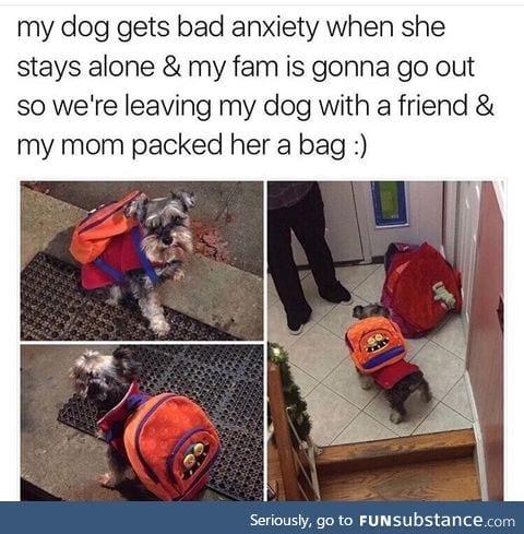 Doggo with a abag