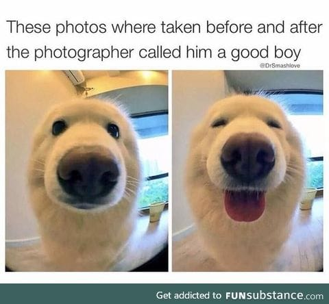 what a goodly boi