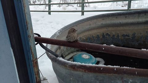Man uses his breath to free Sparrow Frozen to Fence