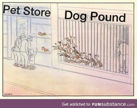 Adopt, Don't Buy