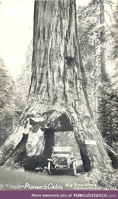 RIP Pioneer tunnel tree. The 1000+ year old sequoia tree finally fell