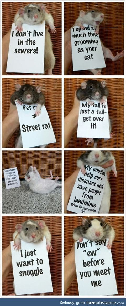 Rats are so misunderstood
