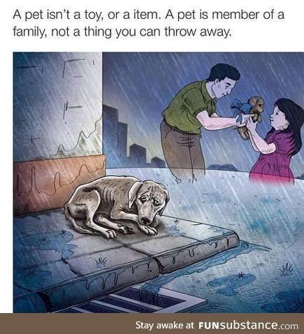Pet reminder