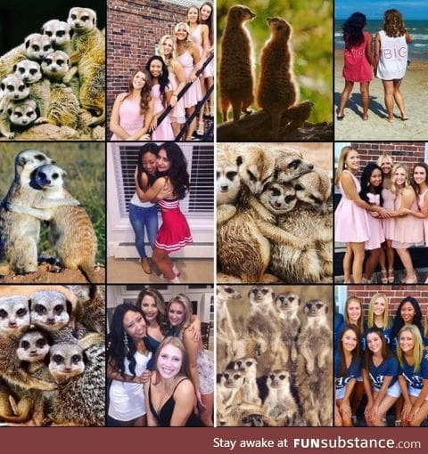 Ever notice how sorority girls pose exactly like meerkats in pictures?
