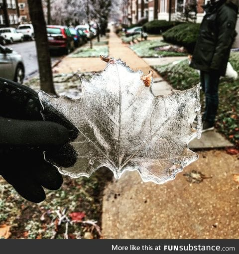 Ice Leaf after the ice storm in St. Louis
