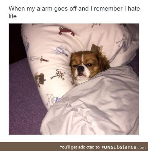 Waking up.