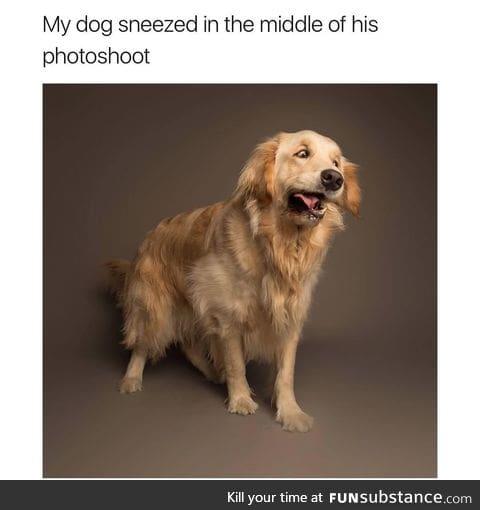 Sneezy pupper