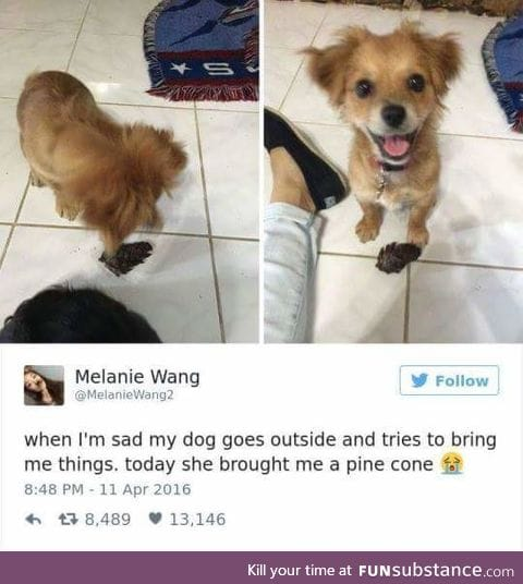 Dogs are beautiful