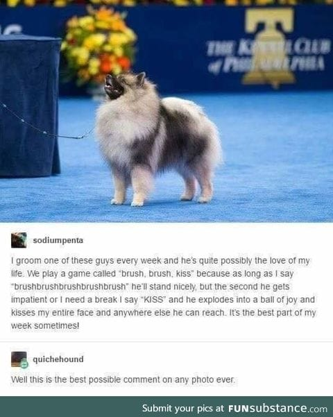 Dogs are precious beings