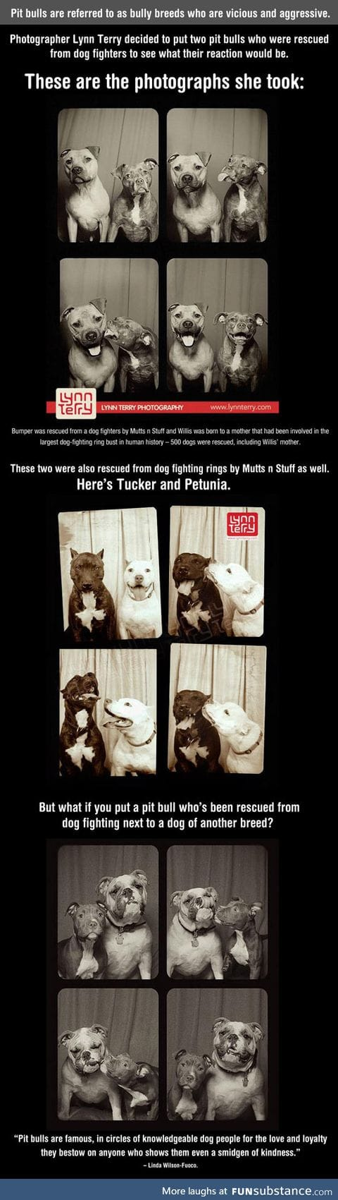 What happens when you put two vicious pit bulls in a photo booth