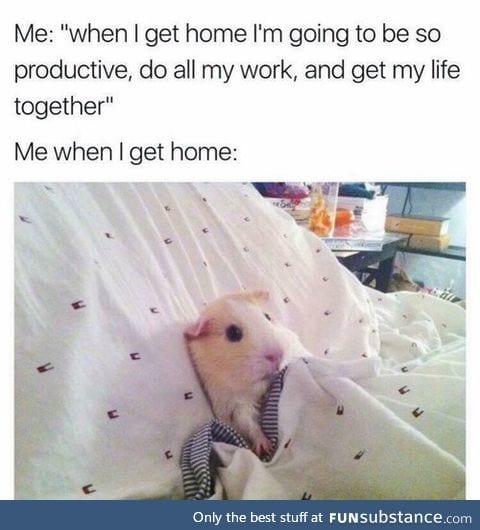 Me: I'll wake up at 6 am and study. Me at 6 am: nah
