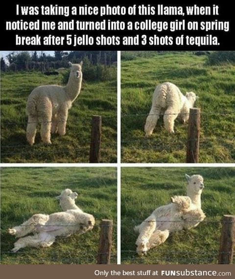 Llama gone wild