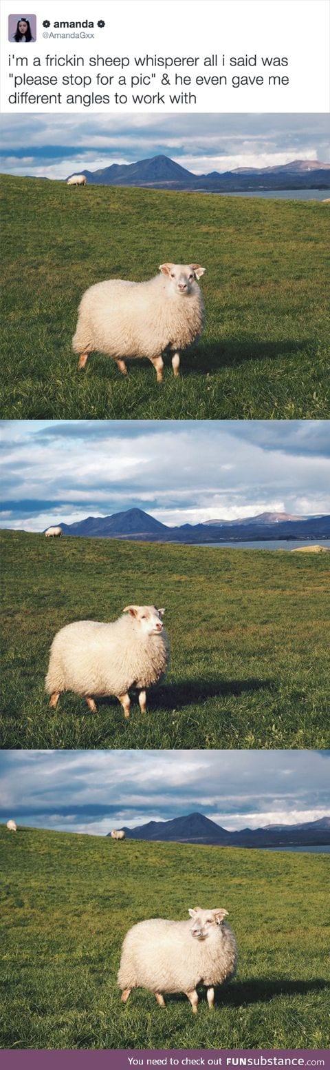 Most photogenic sheep