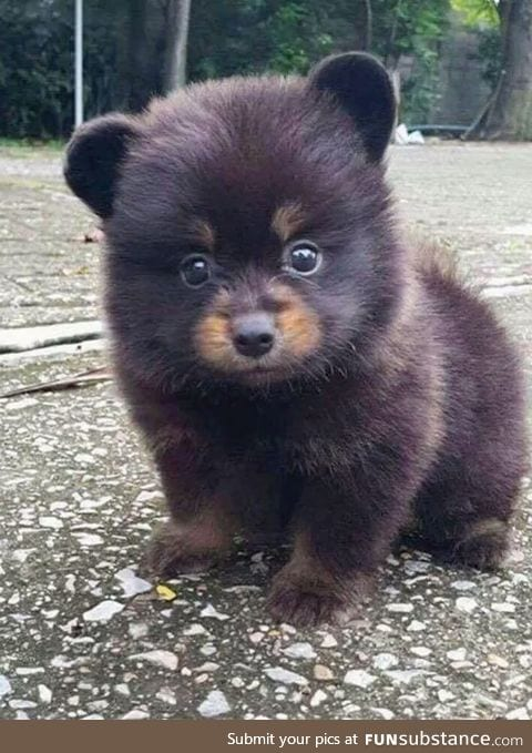 When you can't decide if you wanna be a puppy or a bear
