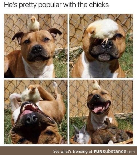 He is pretty popular with the chicks