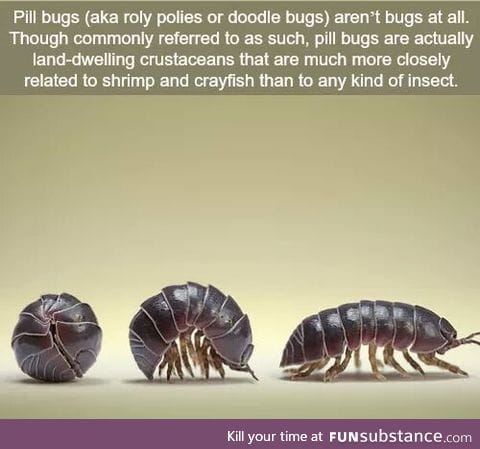 My life is a lie....also I always called them potato bugs, anyone else?