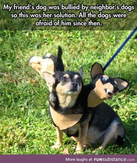 Most clever way to stop dog bullying