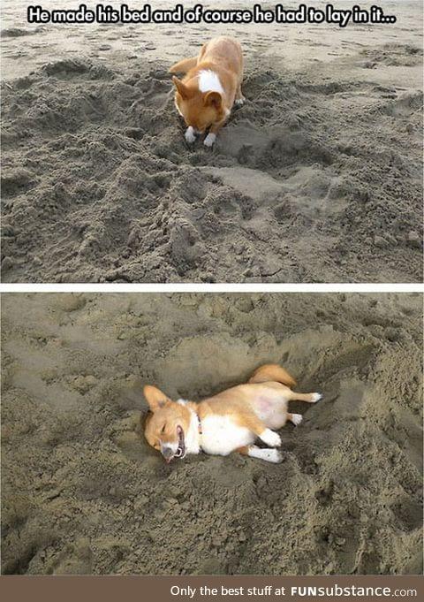 Just a corgi at the beach