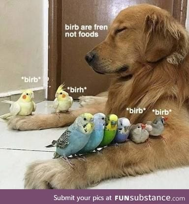 Don't hurt them birbs, frend