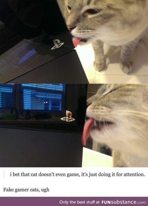 Day 18 of your daily dose of cat : Fake game cats