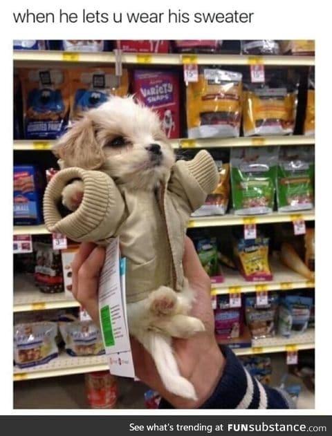 Cute in a sweater
