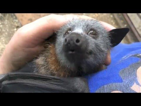Baby bats can be so cute