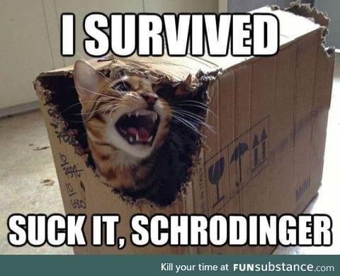 Schrodinger's Cat Final Results