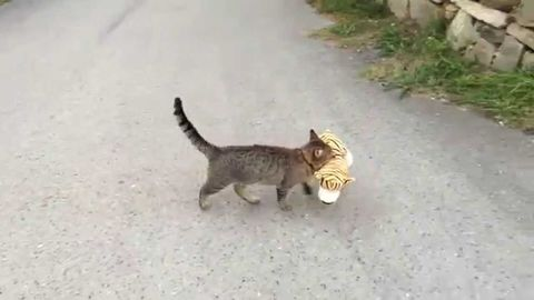 Cat Kidnapped Tiger Cub