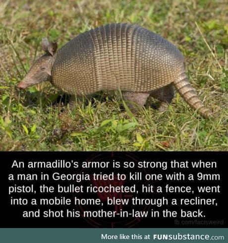 Don't mess with an armadillo