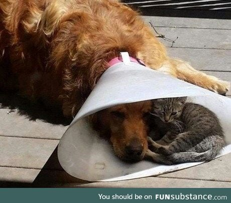Making the cone of shame the cone of adorable