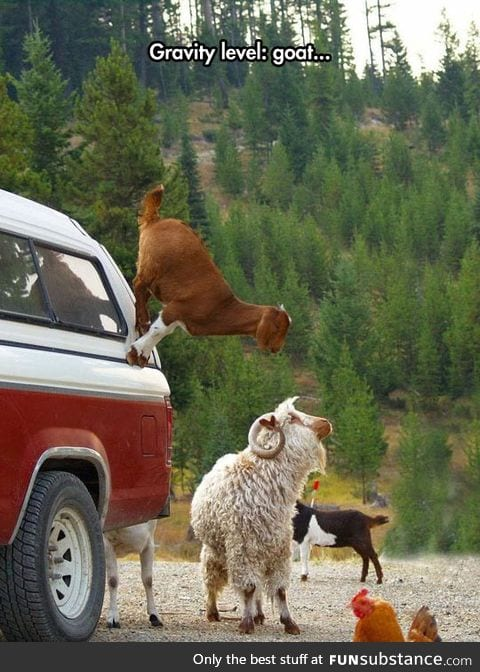 Goats, They Don't Believe In Gravity