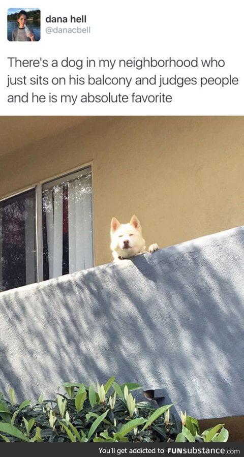 Judgy neighbour