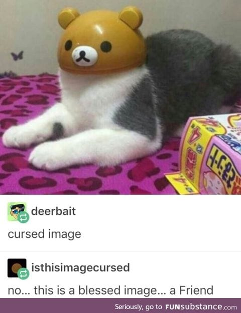 Rikkakuma cat