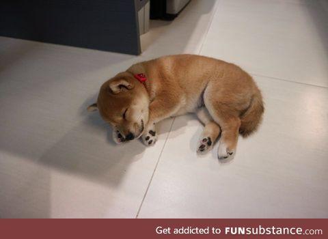 vv smopl sleepster pupster