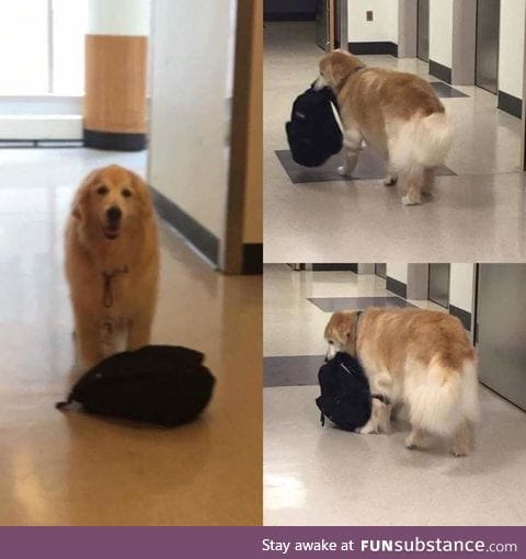 Meet Eddie,the Hospital Therapy dog who is always carrying around his bookbag of toys
