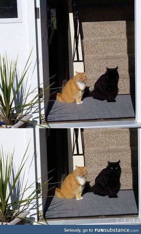 This cat's shadow is actually another cat