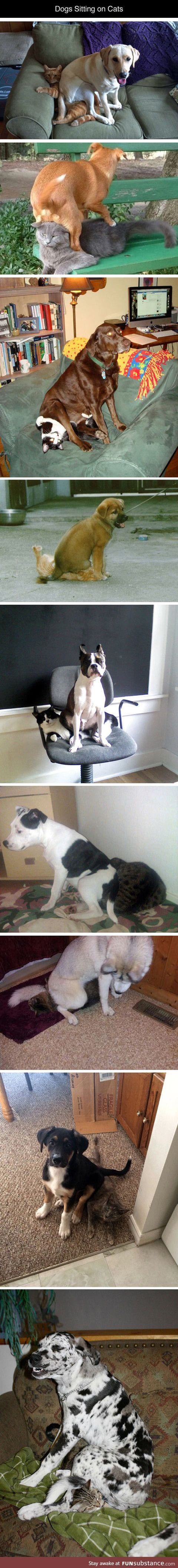 Dogs who found a comfy place to sit