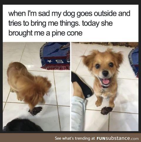 I wish I had this dog