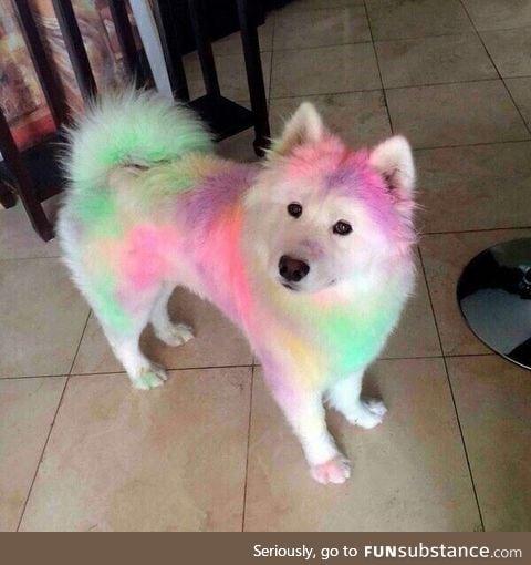 Enjoy this colorful doggo