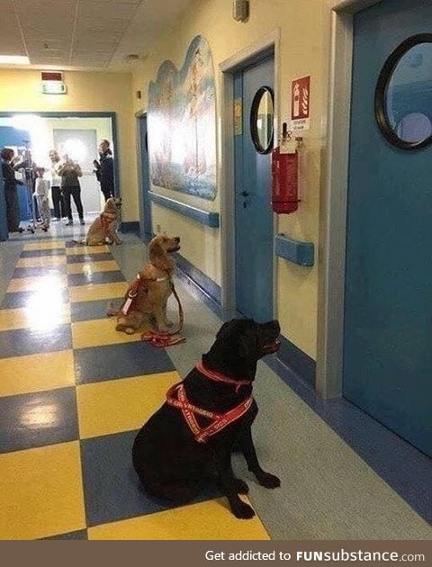 Therapeutic dogs waiting with great anticipation to see their respective children