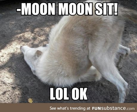 Remember moon moon?