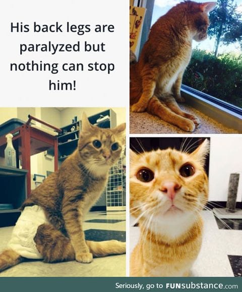 He was thrown out of a speeding car, but he still trusts and loves humans