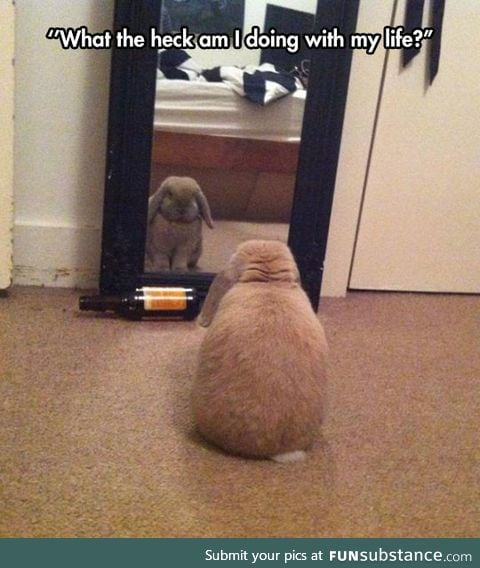 Introspective bunny considers his life choices