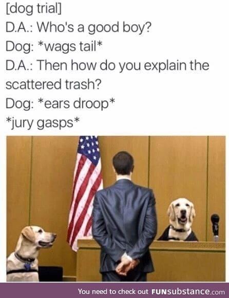 Doggo is not a good boye
