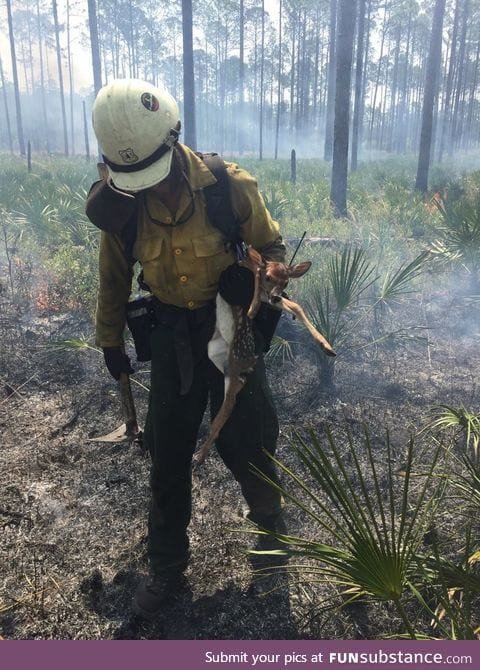 Firefighter saves a deer in 100k plus acre wild fire still burning out of control