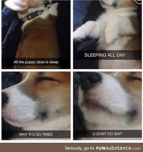 Damn you pupper