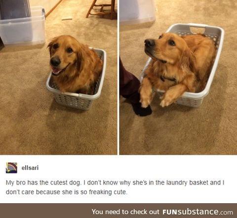 Doggo in a laundry basket