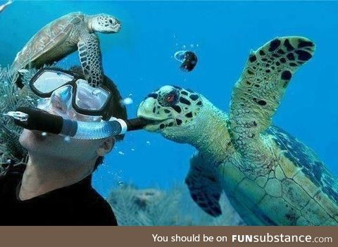 Here's an example of a killer turtle