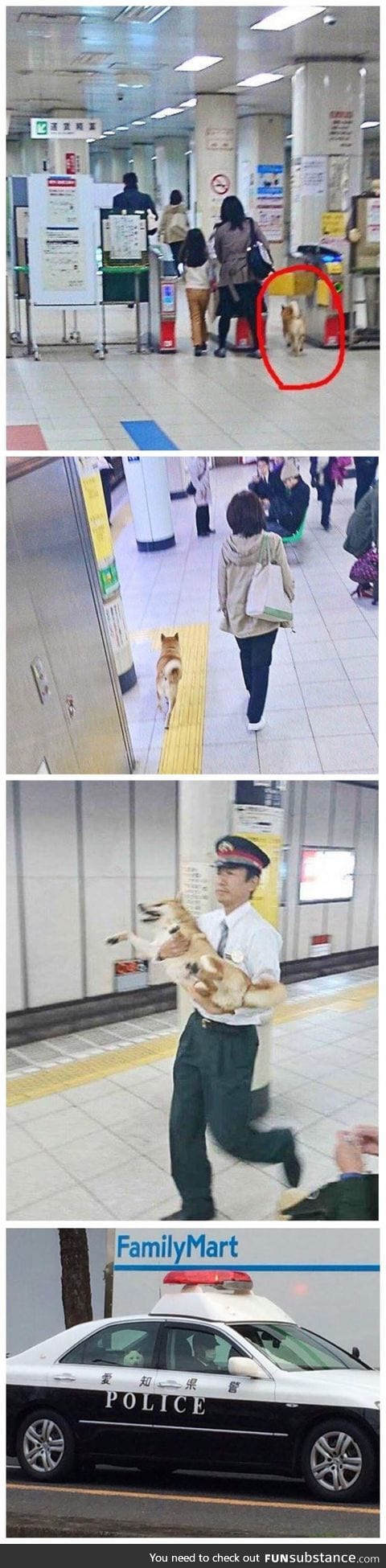 Doge was arrested for passing the gate without ticket